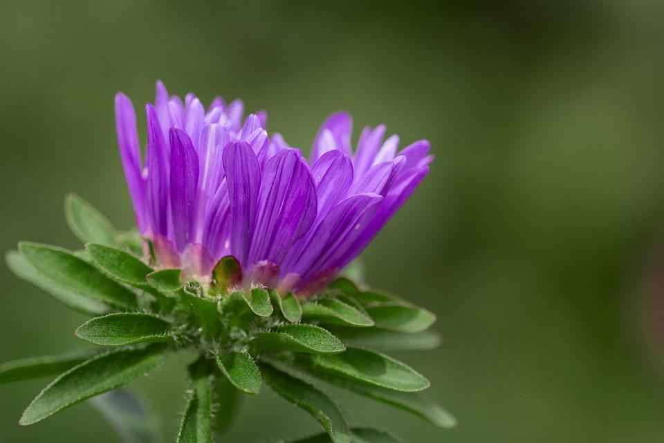 free photo flower, violet, violet flower  free image on pixabay, Beautiful flower