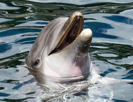 Dolphin Sea Marine Mammals Wise Intelligen