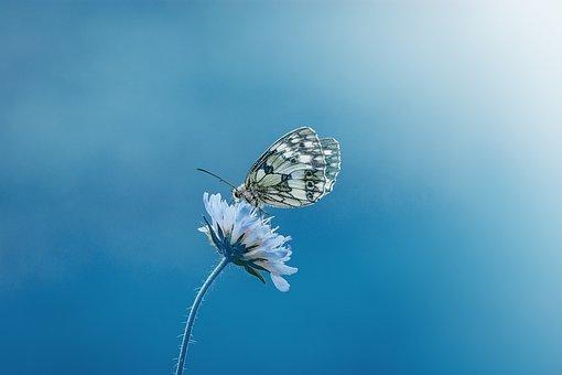 Бабочка, Животное, Насекомое, Крупным Планом