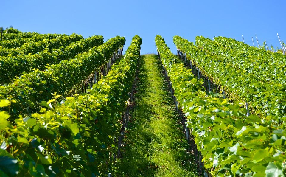 Vineyard Series Mountain 183 Free Photo On Pixabay