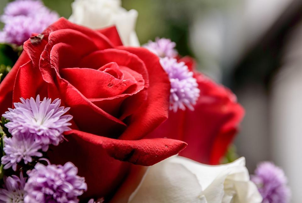 76+ Gambar Bunga Mawar Cantik Paling Keren
