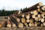 wood, high