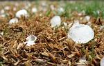 hailstone, storm