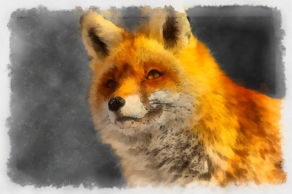 Fuchs Hayvan Boyama Kucuk Pixabay De Ucretsiz Resim