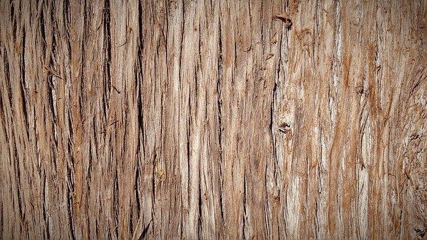 Baumrinde - Kostenlose Bilder auf Pixabay