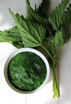 Vegetable, Stinging Nettle, Health
