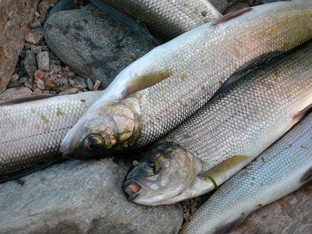 На Байкале усилена рыбоохрана нерестящегося омуля