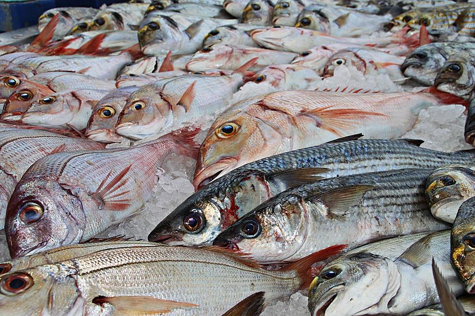 Pesce, Pesca, Pesca Tradizionale, Mercato Del Pesce