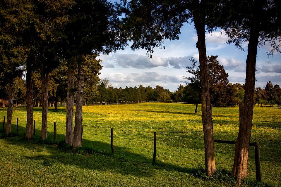 Alabama's Farming History