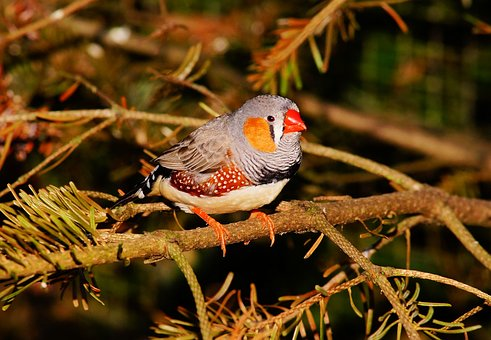 Bird, Small, Colorful, Finch