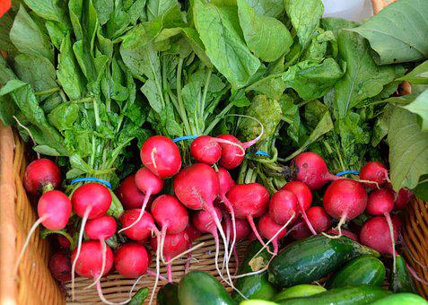 Red Radish, Radish, Vegetable, For Sale