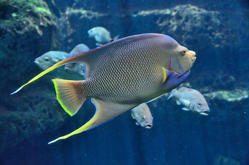 Tropical Fish Aquarium Saltwater Water Und