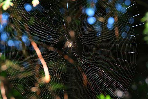 Cobweb, Spider, Close, Nature, Insect