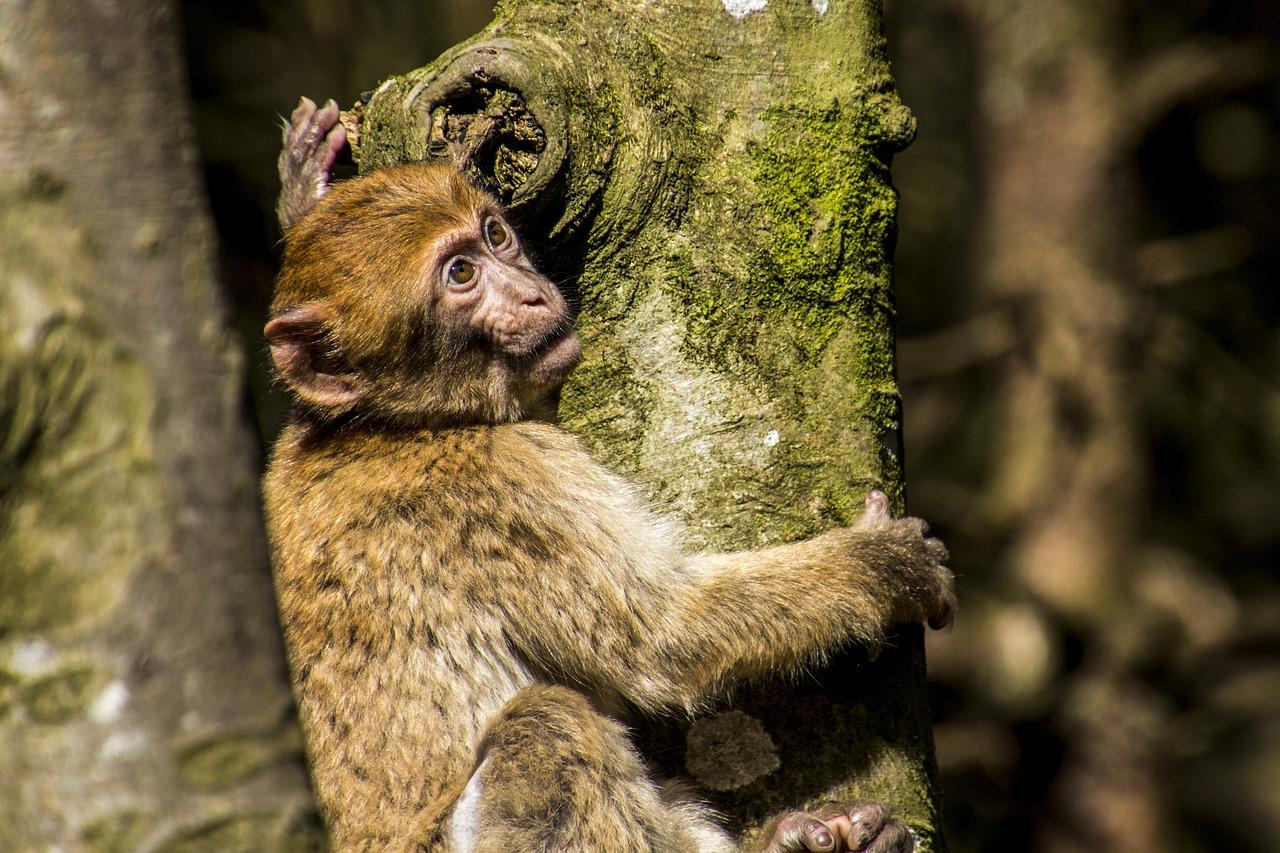 поиск картинки обезьяны