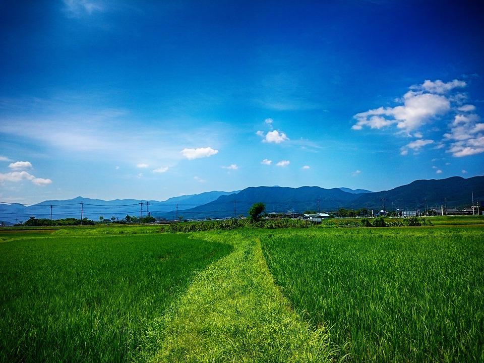 田, 田んぼ, 田園, 田舎, 夏, 快晴, 青空, 日本, 畑