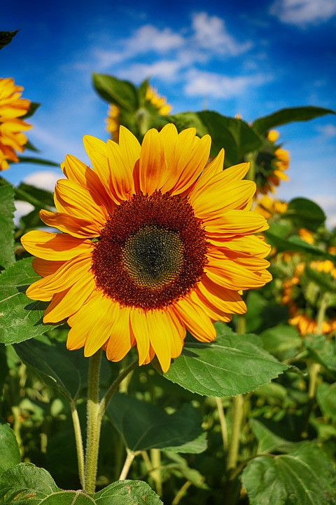summer, flowers  free images on pixabay, Beautiful flower