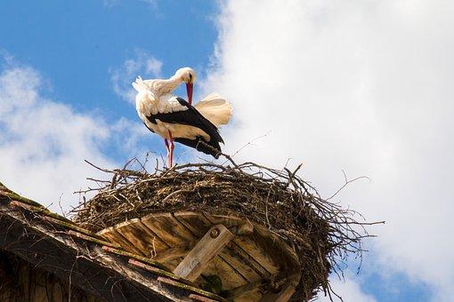 Stork, Nest, Bird, Storchennest, Nature