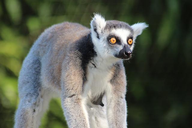 Madagascar animal sauvage photo gratuite sur pixabay - Images d animaux sauvages gratuites ...
