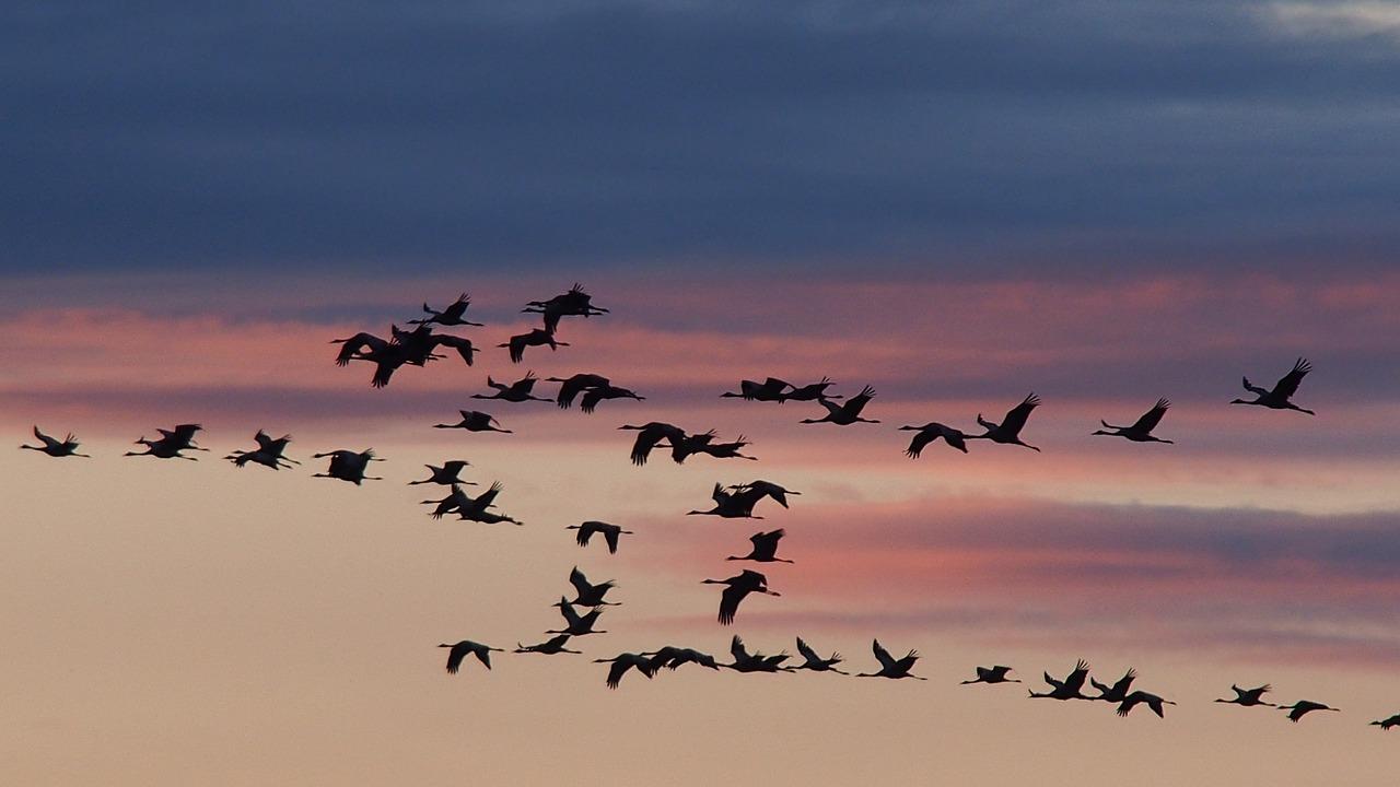 заболевание виды перелетающих птиц фото рунической формулой