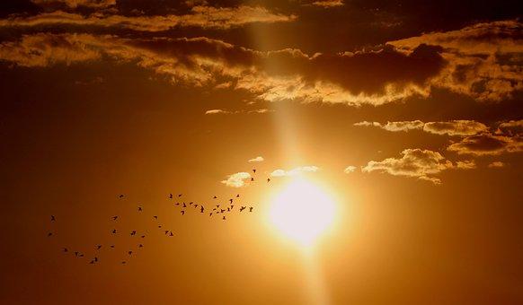 Pôr Do Sol, Aves, Nuvem, Sol, Céu
