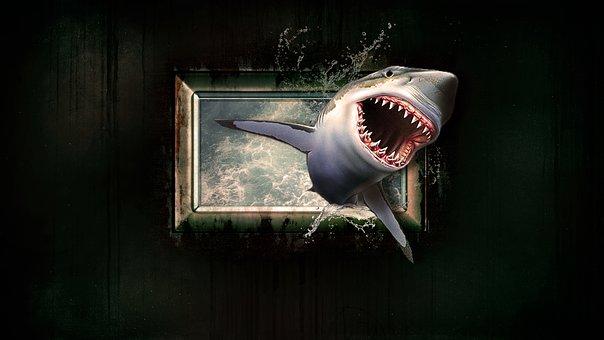 Скачать Видео Обои Акула