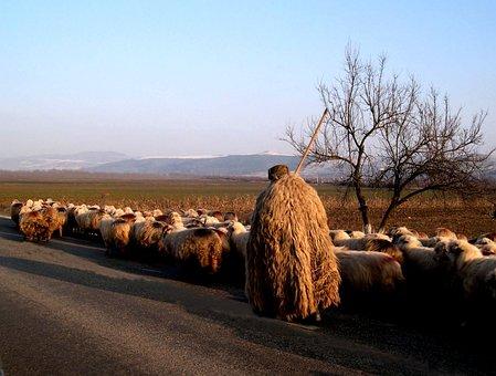 Nature, Spring, Animal, Sheep, Wool