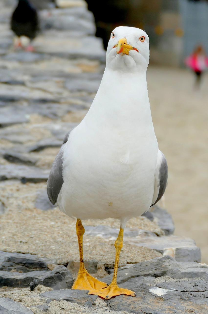 Прикольная картинка чайки, поддержать друга открыткой