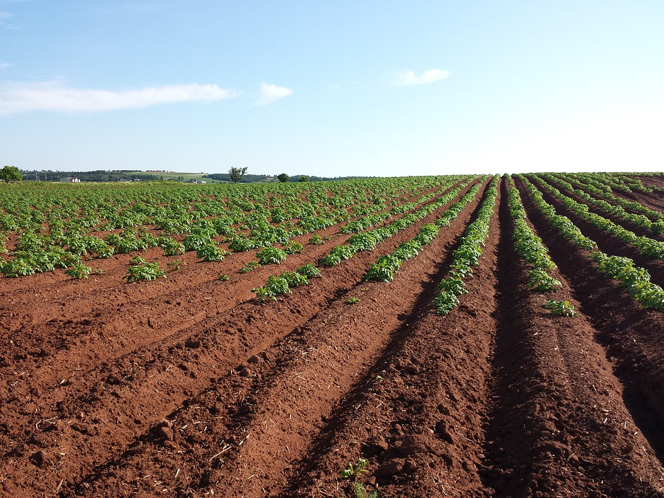 Free photo potato field crops farm soil free image for Pictures of uses of soil