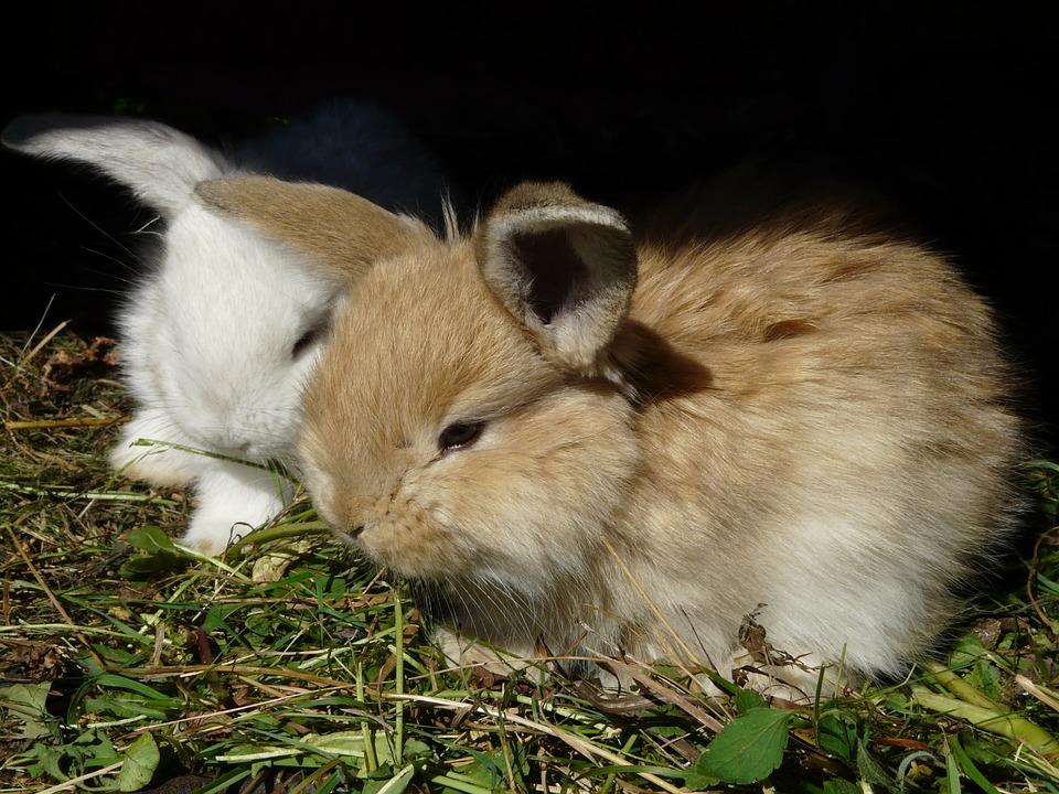 rabbit sexleksak gratis bilder