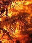fire, conflagration