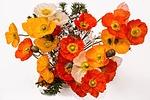 poppies, cheerful, happy