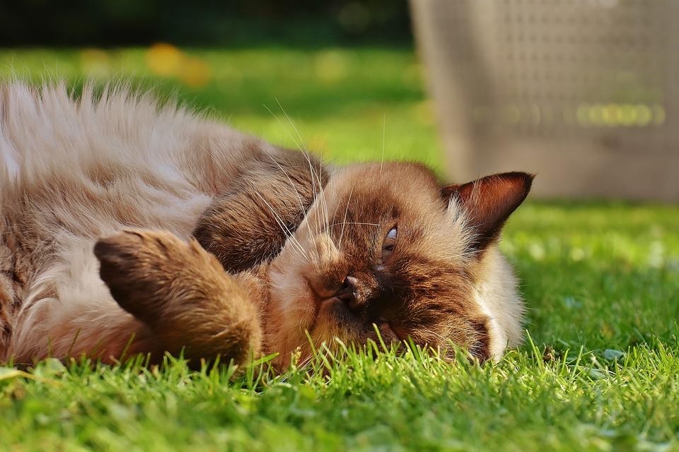 hnedá mačička obrázky ryšavka BBW porno