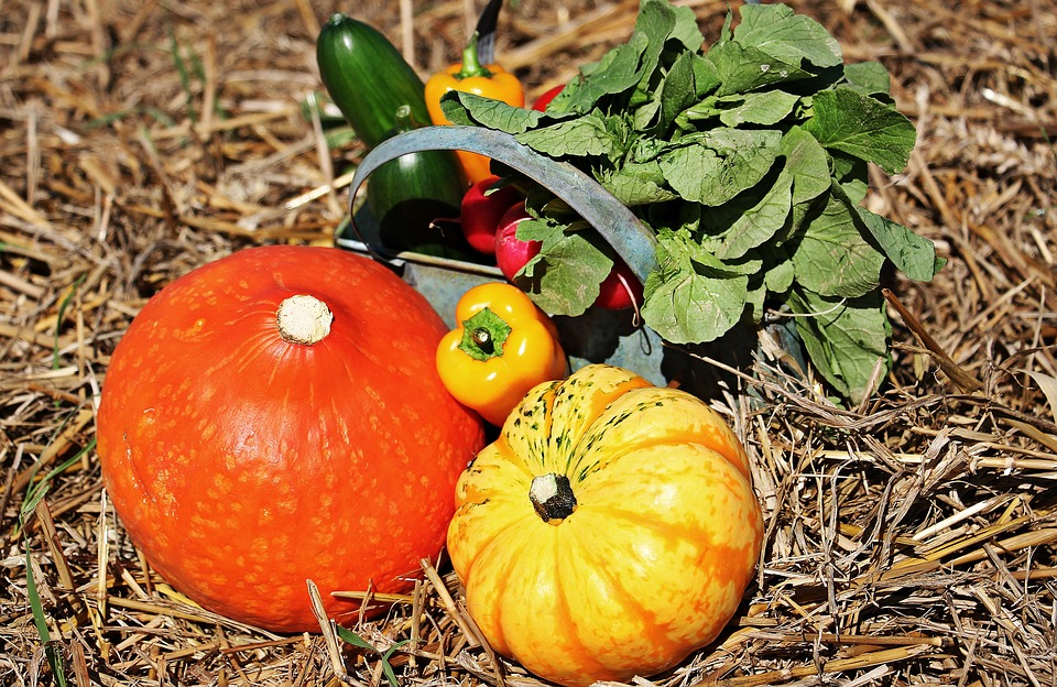 Pumpkins and Cucumbers