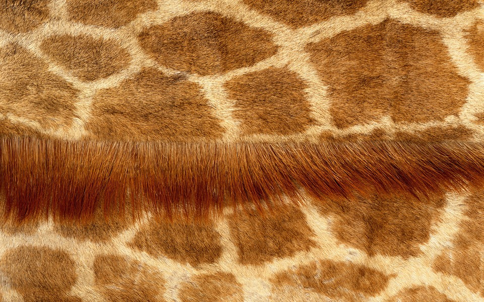 animal skin patterns giraffe - photo #9