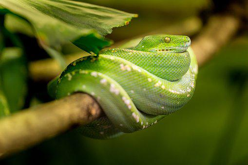 Snake, Green, Macro, Animal, Zoo