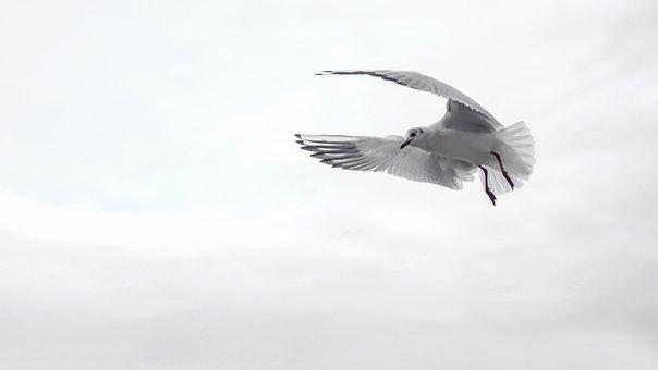 Möve, Flügel, Vogel, Meer, Fliegen
