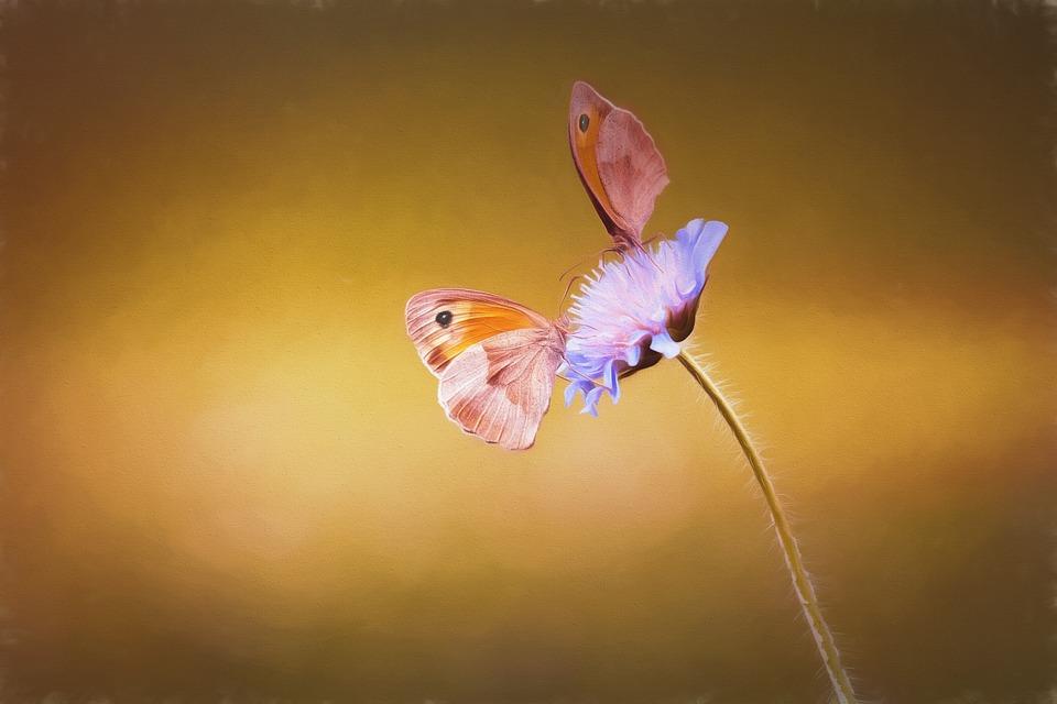 Bild, Malerei, Malen, Gemalt, Gemälde, Schmetterlinge