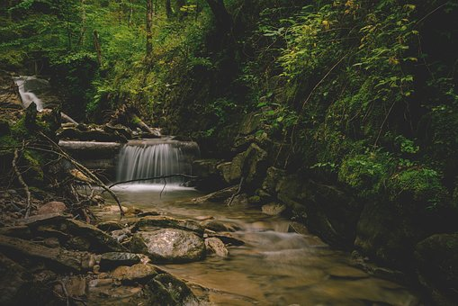 Bach, River, Forest, Water, Nature, Flow