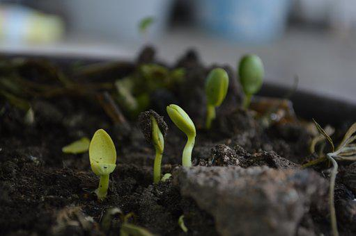 Grown Up, Born, Earth, Nature, Soil