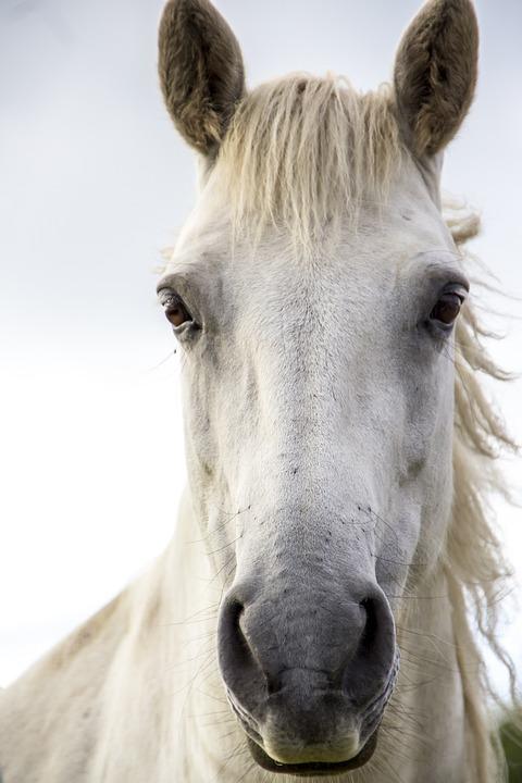 Horse Print White Irish Free Photo On Pixabay