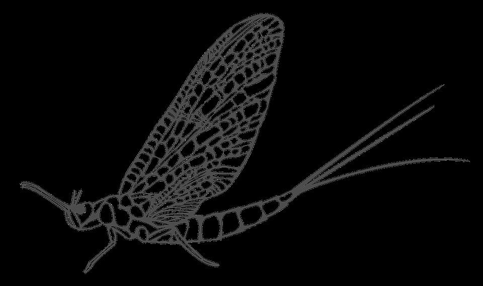 Εφήμερα Έντομα - Δωρεάν εικόνα στο Pixabay