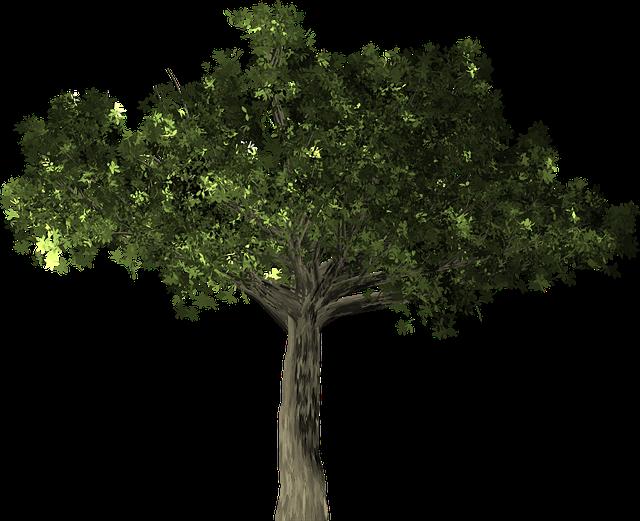Free Illustration: Ficus, Tree, Plant, Isolated