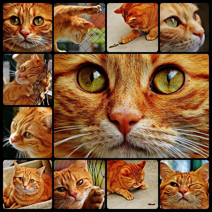 Download 95+  Gambar Kucing Untuk Kolase Paling Lucu HD