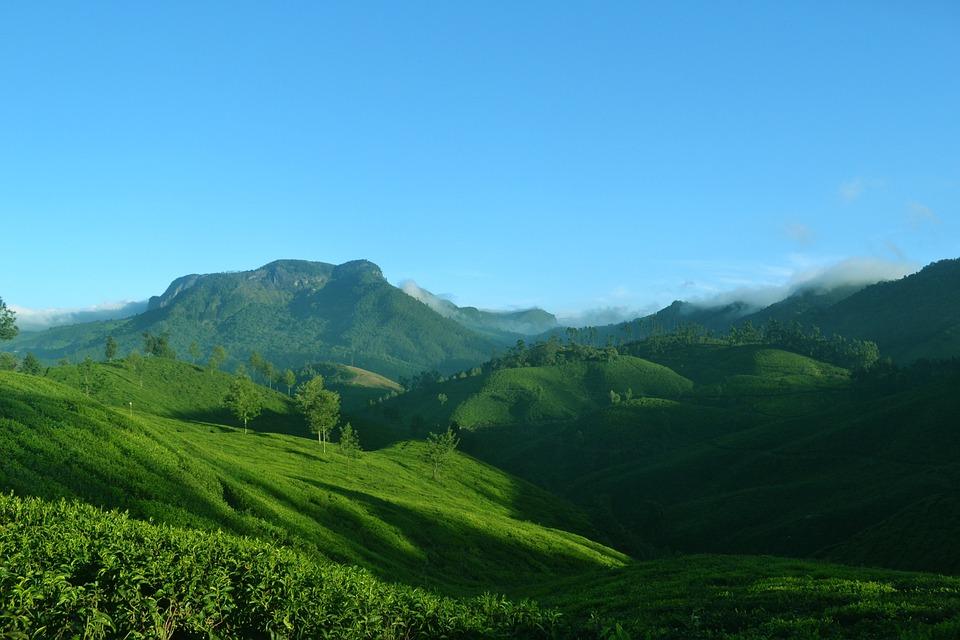 Travel To India Munnar, Kerala, India, Nature, Landscape, Tea