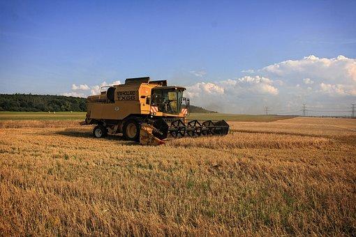 В Брянской области началась уборка зерновых, намолот зерна составил 86388 тонн