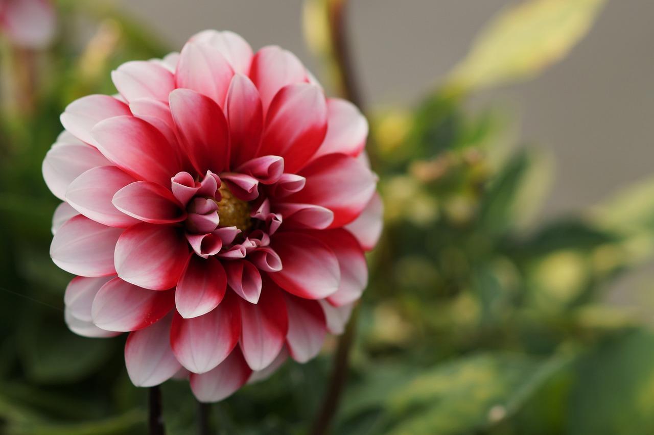 Красивые картинки двухцветные цветы