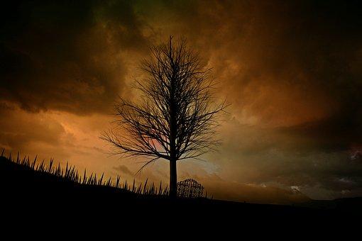 木, 風景, 孤独な, 気分, 神秘的な, ローンツリー, 空の色, 夕暮れ