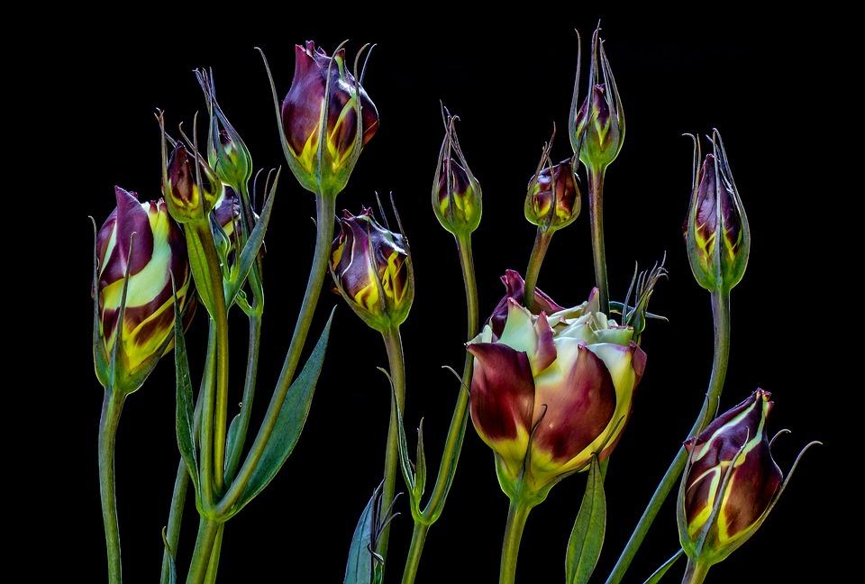 Flores, Primer Plano, Belleza, La Delicadeza, Planta