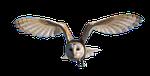 owl, bird, nature