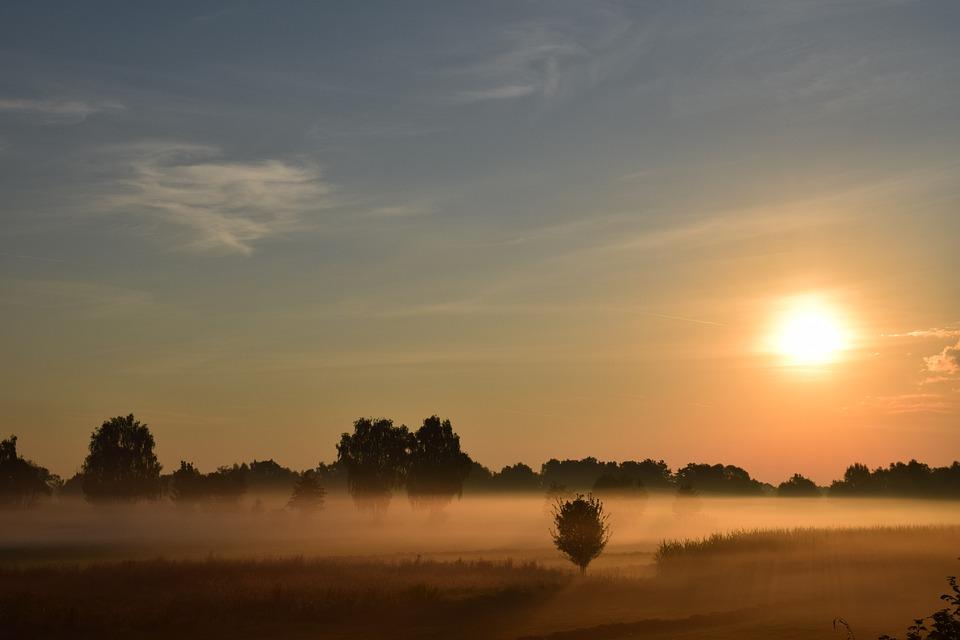 sun fog sunrise trees - photo #17